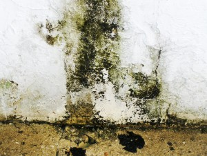 black mold infestation fl