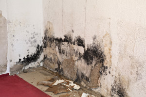 black mold remediation fl