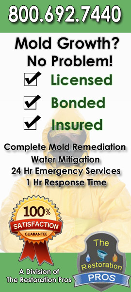 florida mold remediation and environmental cleanup